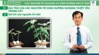Các nguyên tố khoáng và dinh dưỡng nitơ ở thực vật