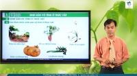 Sinh sản vô tính ở thực vật