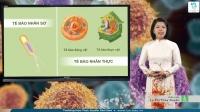 Tế bào nhân sơ và tế bào nhân thực